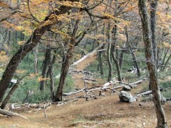 Camino al Refugio del Cerro Piltriquitrón